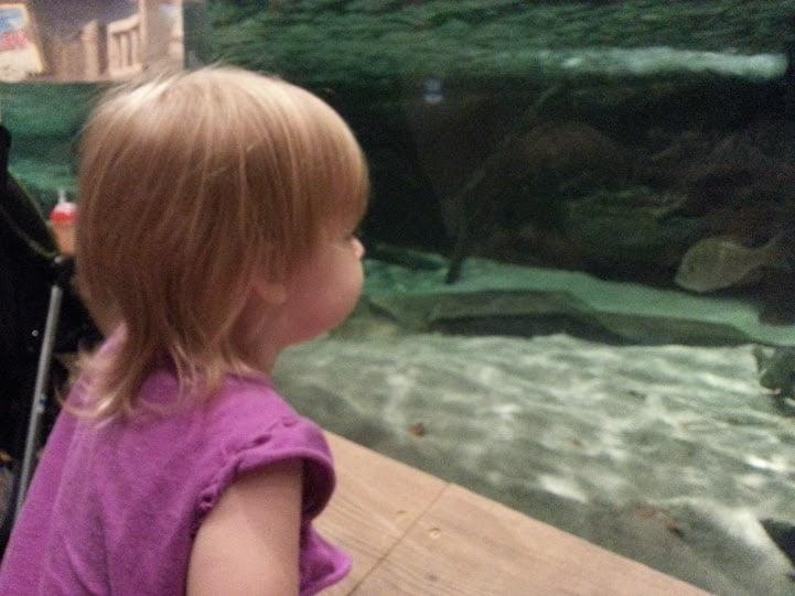 Took Allison to the aquarium!