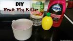 DIY Fruit Fly Killer